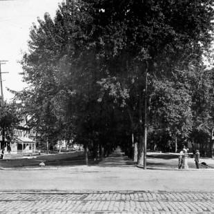 Avenue King-Edward en 1915 avec des arbres et du gazon.